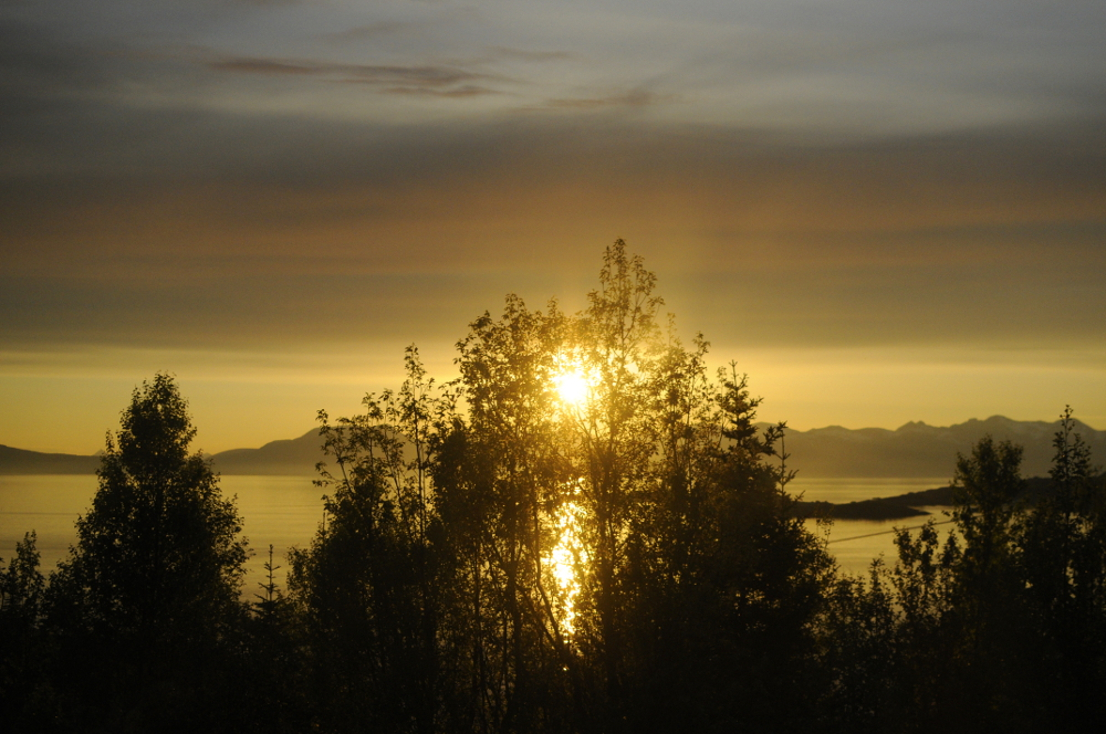 The Triumphant Midnight Sun